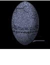egg_celestial_kuron_egg.png