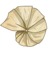 egg_paper_shell.png