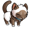 kitty_kitzi_long_haired_siamese.png