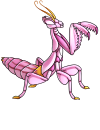orchid_mantis_pink.png
