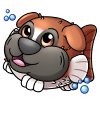 pupperfish_boxer.png